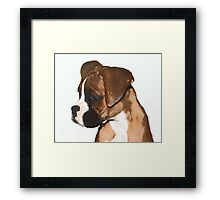 Fawn boxer puppy Framed Print