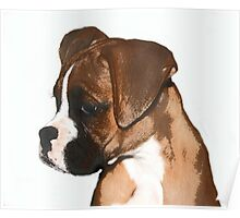 Fawn boxer puppy Poster