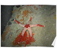 Starfish Massacre (its a bloody mess!) Poster