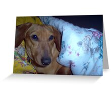 Cozy Puppy Greeting Card