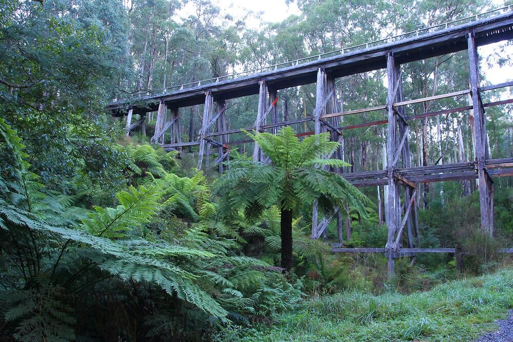 Noojee Trestle Bridge by Lindsay Knowles
