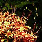 flowers by xXDarkAngelXx