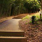 steps... by xXDarkAngelXx