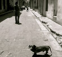 Street Dog by Valerie Rosen