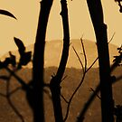 branches in sepia by xXDarkAngelXx