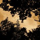 sky thru trees by xXDarkAngelXx