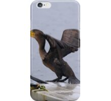 Cormorants diving into lake iPhone Case/Skin