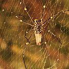golden orb spider by xXDarkAngelXx