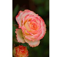 """""""UNIQUE"""" - from my rose garden Photographic Print"""