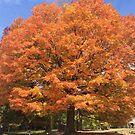 Find the beauty in the fall by Kreardon