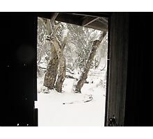 Narnia with snowgums Photographic Print