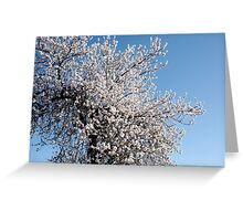 Blossoms 2 Greeting Card