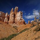 "Bryce Canyon ""trees"" by Darren Newbery"
