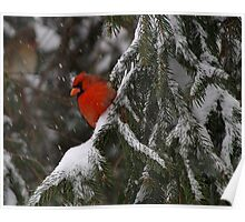 Winter Red Poster
