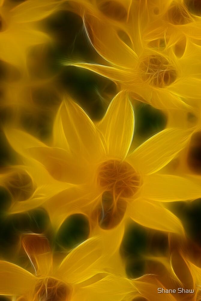 Hazy Yellow by Shane Shaw