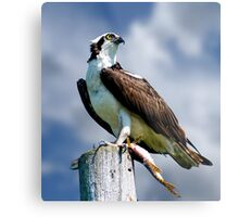 Osprey with Pike Metal Print