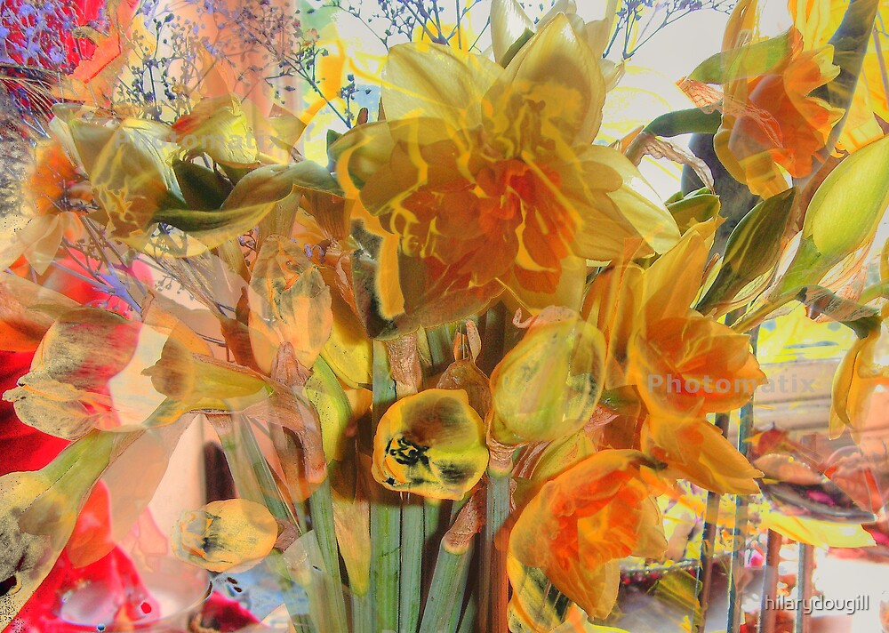 Daffodils HDR by hilarydougill