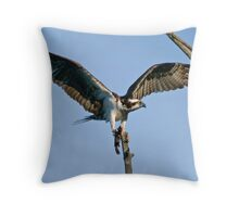 Osprey - Ottawa, Ontario Throw Pillow