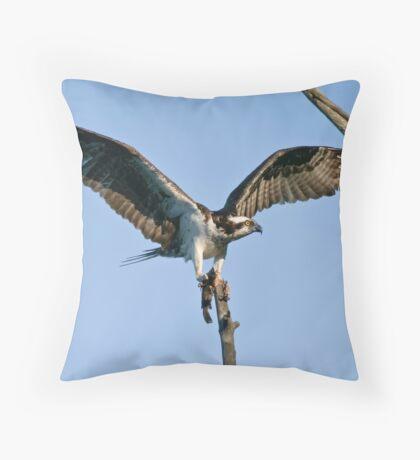 Osprey - Ottawa, Ontario Throw Pillow