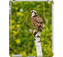 Osprey on Tree - Ottawa, Ontario iPad Case/Skin