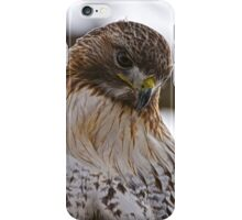 Red Tailed Hawk Portrait - Presqu'ile Park iPhone Case/Skin