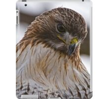 Red Tailed Hawk Portrait - Presqu'ile Park iPad Case/Skin