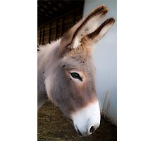 Donkey Sanctuary of Canada #1 Photographic Print