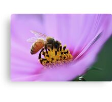 Nectar in Pink Canvas Print