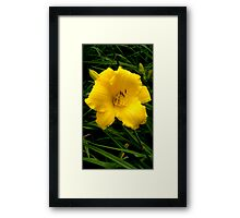 Sunshine Lily Framed Print