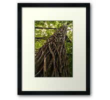 Tree Trunk to the Sky Framed Print