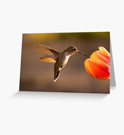 Sun Setting on a Hummer & Tulip Greeting Card