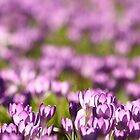 Spring Has Sprung by CBoyle