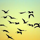 Flight of the birds by K.D. Hemi