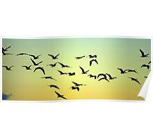 Flight of the birds Poster