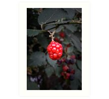 Berry Red Art Print