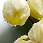 White Flower Droplets by JimFilmer