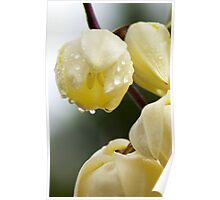 White Flower Droplets Poster