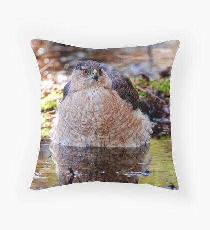 Coopers Hawk - Ottawa, Ontario Throw Pillow