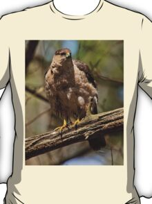 Coopers Hawk - Ottawa, Ontario T-Shirt