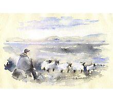 Sheep In Ireland Photographic Print