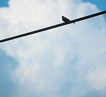 Bird on a wire by MrSheps
