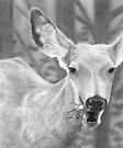 Dandelion Delight - Mule Deer by Heather Ward