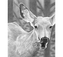 Dandelion Delight - Mule Deer Photographic Print