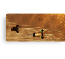 Mallard Drake & Hen - Golden Hour Canvas Print