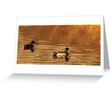 Mallard Drake & Hen - Golden Hour Greeting Card