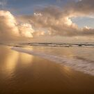 Winning Gold _ Coolum Beach by Barbara Burkhardt