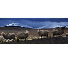 Sheep at Llyn Aled Photographic Print