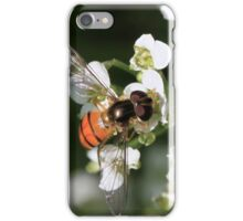 Asarkina africana iPhone Case/Skin