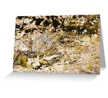 Freshwater bubble Greeting Card