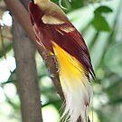 Bird Of Paradise by sarah ward